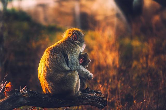 monkey-1955122_640